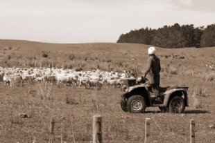 quad and sheep for young farmer tab